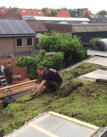 dakdekker-groendak-aanleg